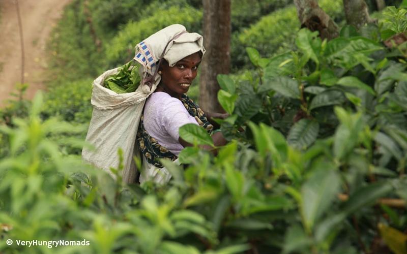 Tea picker in Ella, Sri Lanka - People we meet travelling