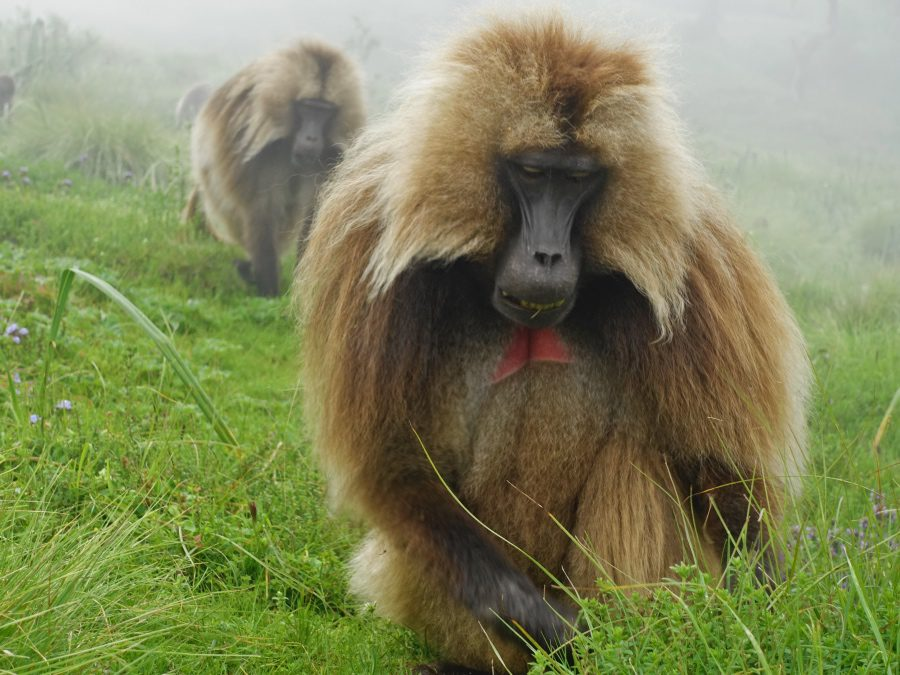 day trip to simien mountains