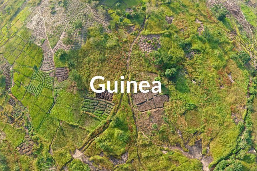 Guinea Featured