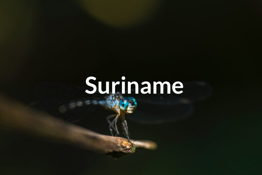 Suriname Featured