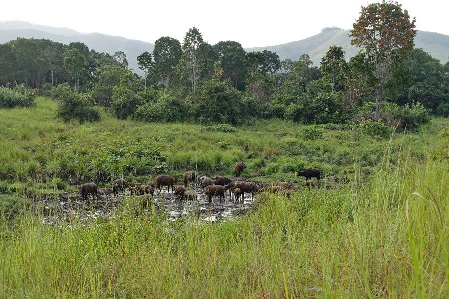 The Year 2019 in Travel - Gabon
