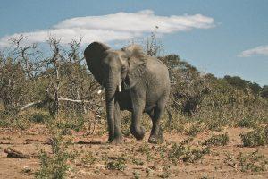 The Ultimate Africa Bucket List - Botswana