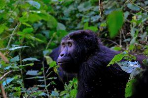 Africa Bucket List - Uganda
